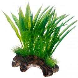 Flora Root 1 S 17cm