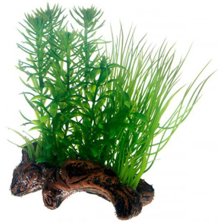 Flora Root 2 S 17cm