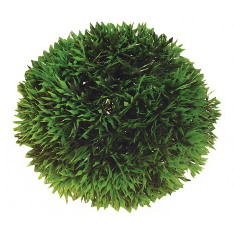 Plant Ball