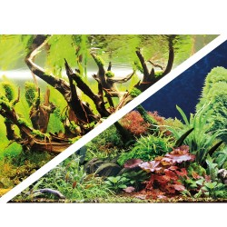 Green Secret/Wood Island