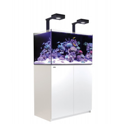 Reefer 250 Deluxe