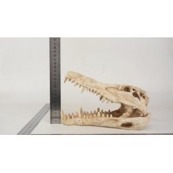 Dekor Gapande Krokodilkranium